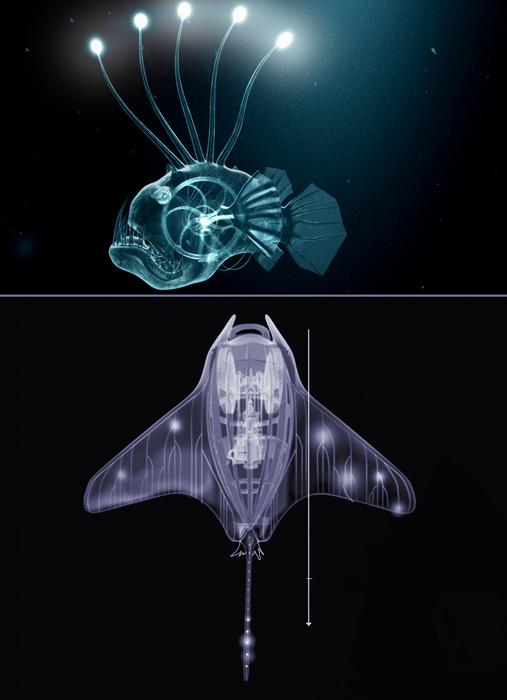 leuchtfischbest